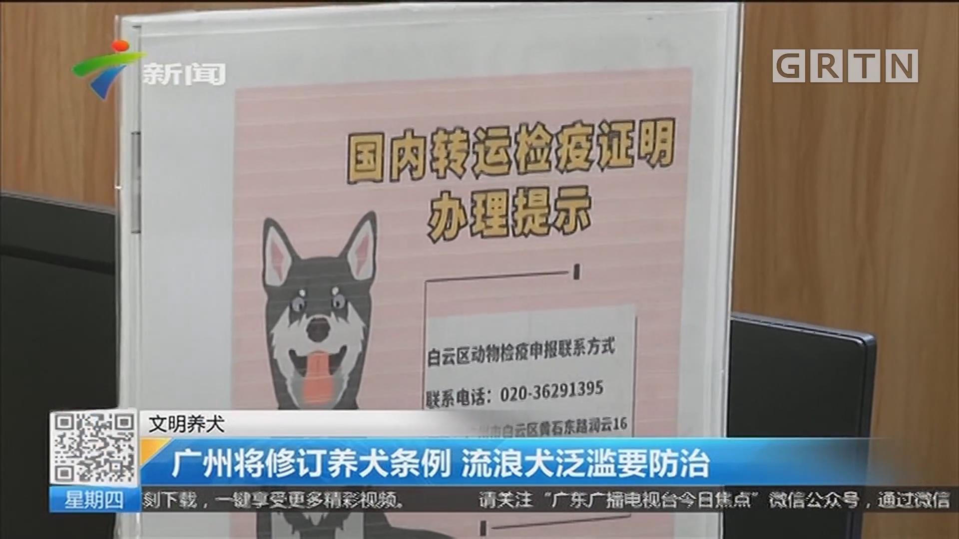 文明养犬:广州将修订养犬条例 流浪犬泛滥要防治