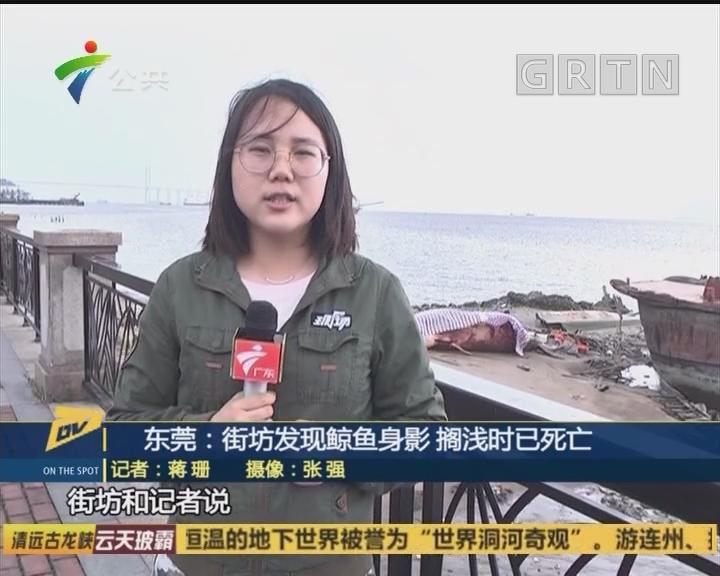 东莞:街坊发现鲸鱼身影 搁浅时已死亡