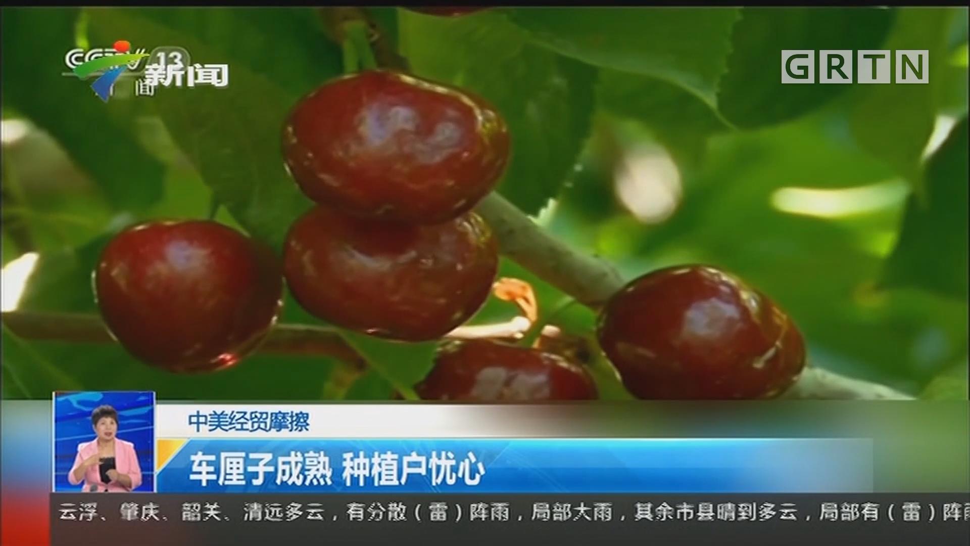 中美经贸摩擦:车厘子成熟 种植户忧心