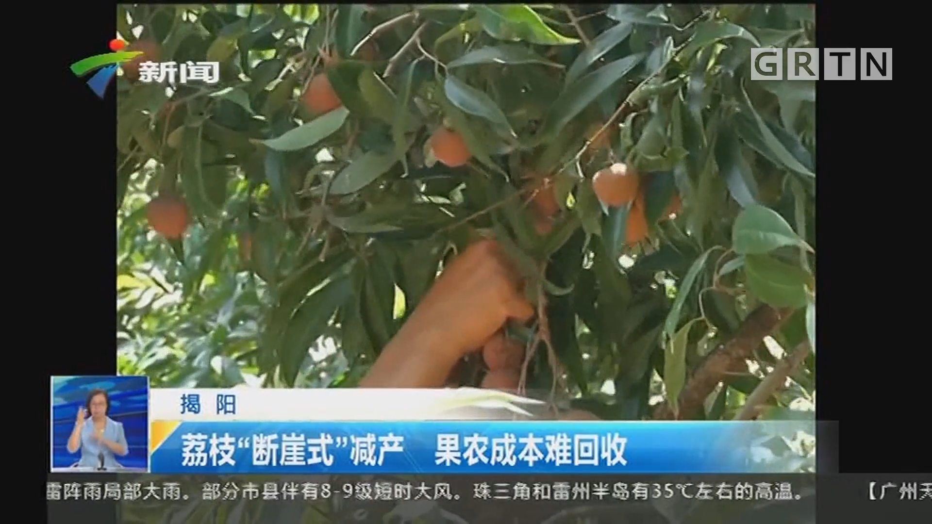 """揭阳:荔枝""""断崖式""""减产 果农成本难回收"""
