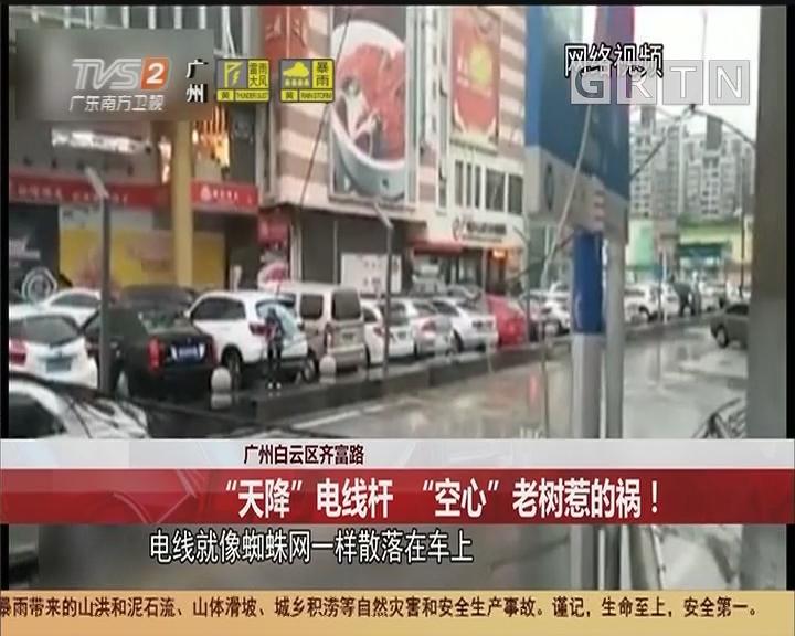 """广州白云区齐富路:""""天降""""电线杆 """"空心""""老树惹的祸!"""