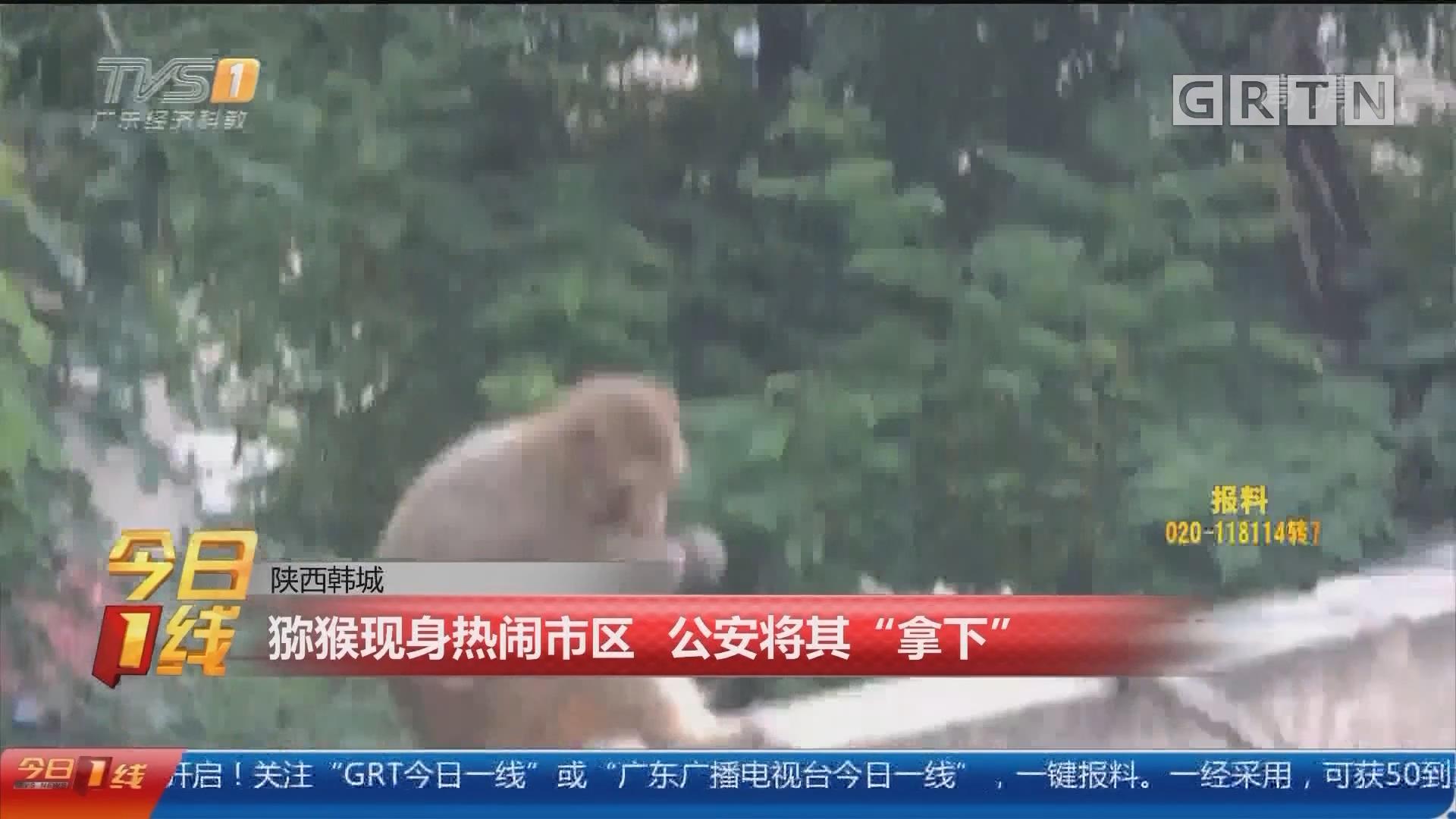 """陕西韩城:猕猴现身热闹市区 公安将其""""拿下"""""""