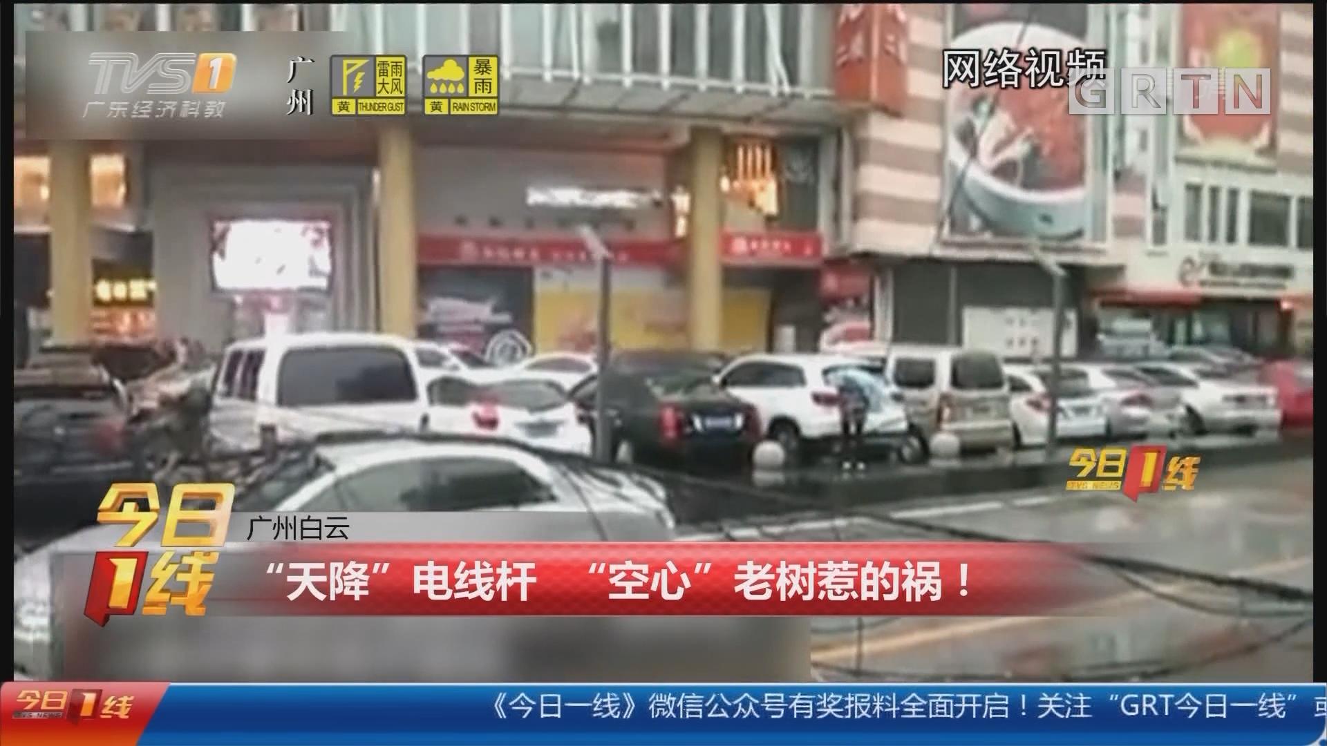 """广州白云:""""天降""""电线杆 """"空心""""老树惹的祸!"""