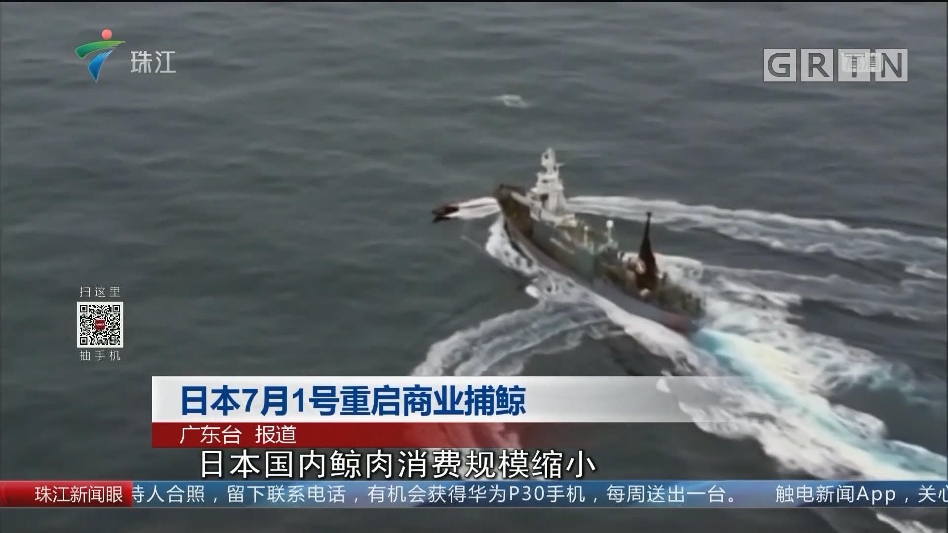 日本7月1号重启商业捕鲸