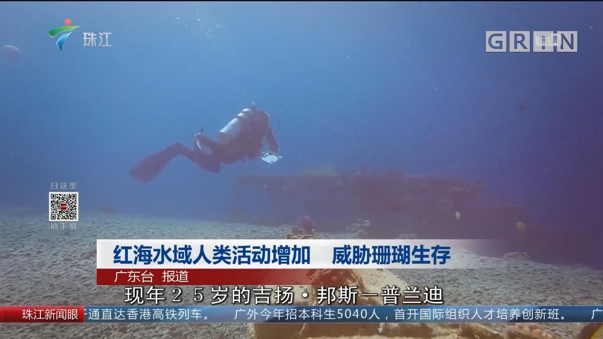 红海水域人类活动增加 威胁珊瑚生存