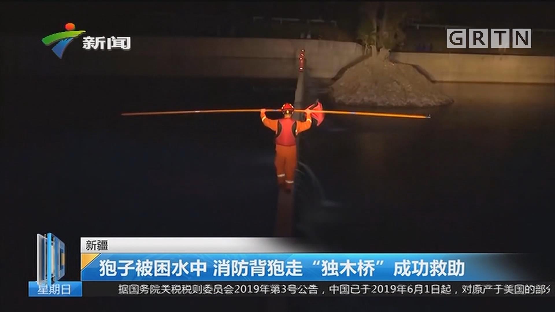 """新疆:狍子被困水中 消防背狍走""""独木桥""""成功救助"""