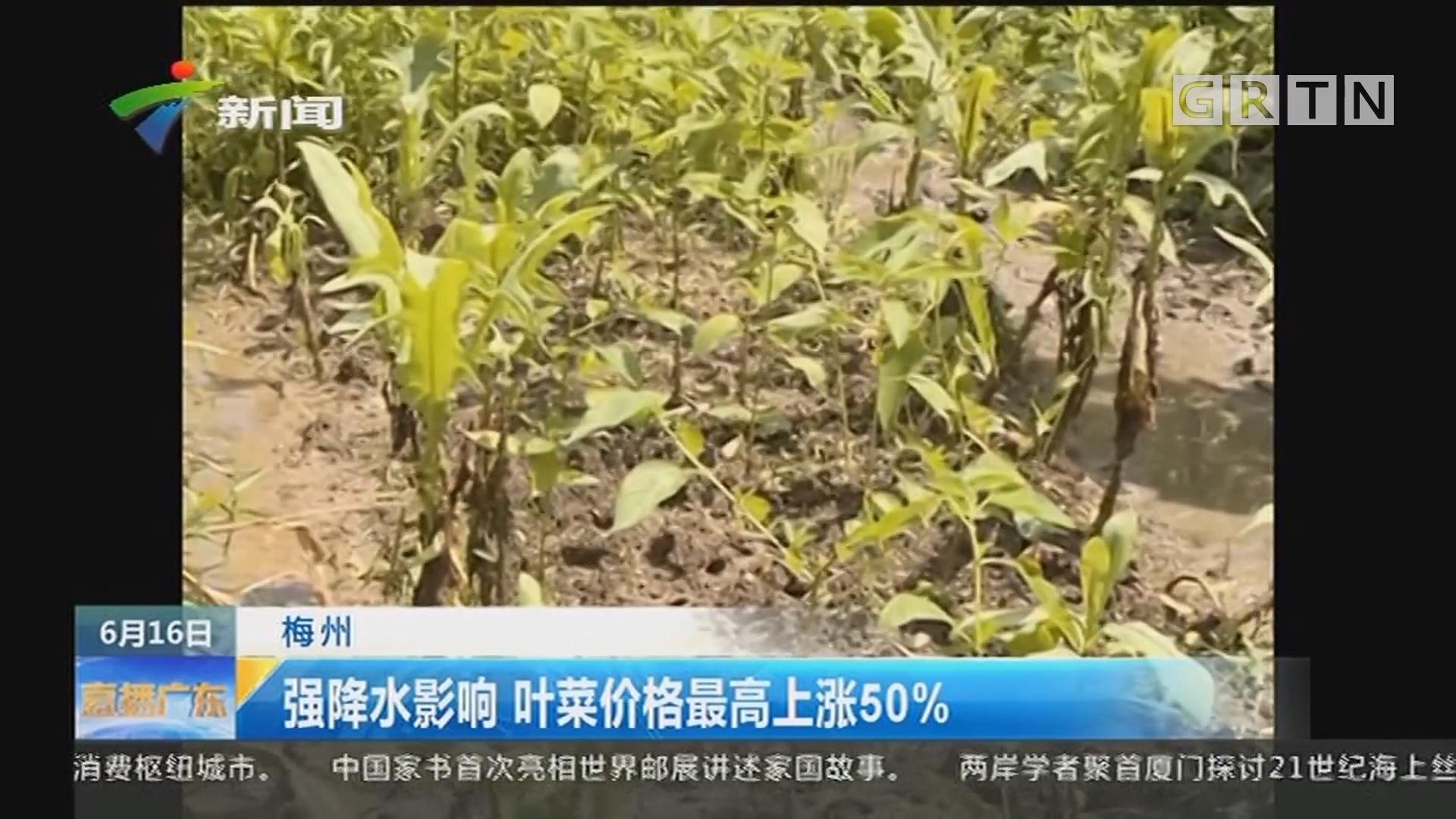 梅州:强降水影响 叶菜价格最高上涨50%