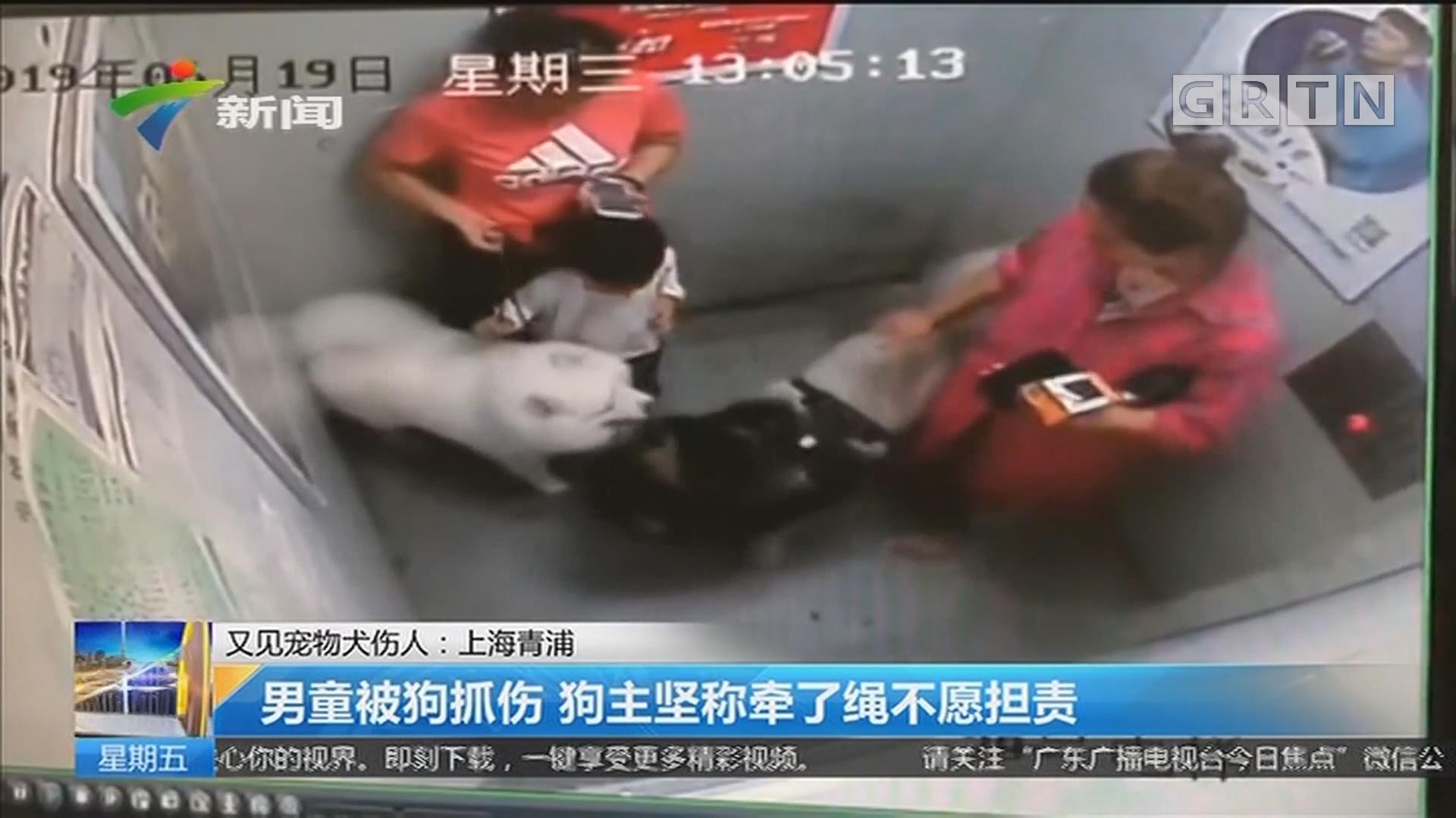又见宠物犬伤人:上海青浦 男童被狗抓伤 狗主坚称牵了绳不愿担责