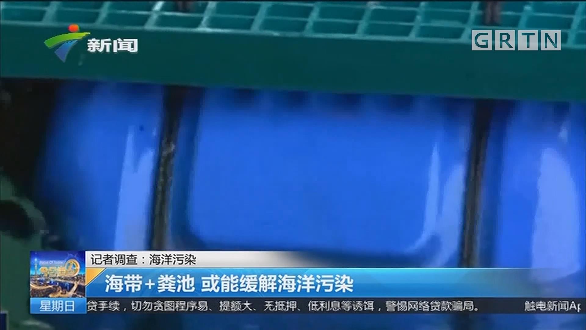 记者调查:海洋污染 海带+粪池 或能缓解海洋污染
