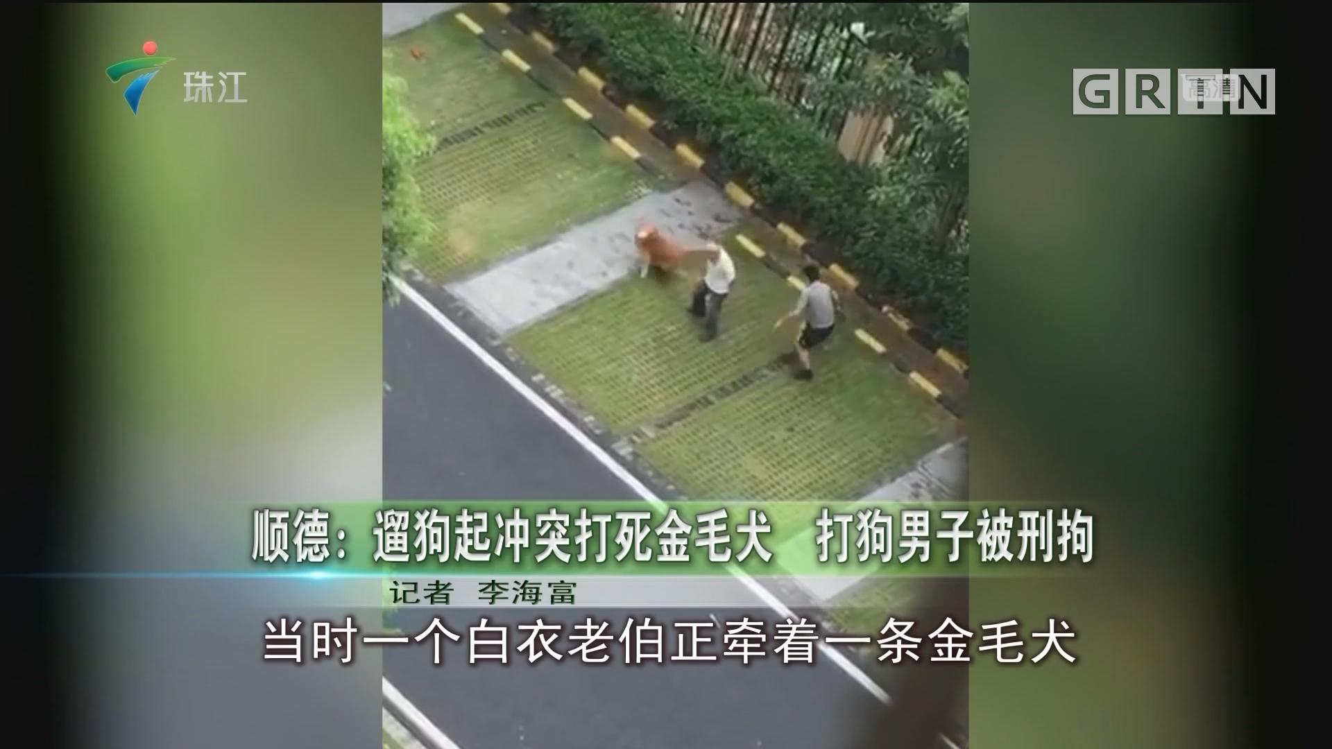 顺德:遛狗起冲突打死金毛犬 打狗男子被刑拘