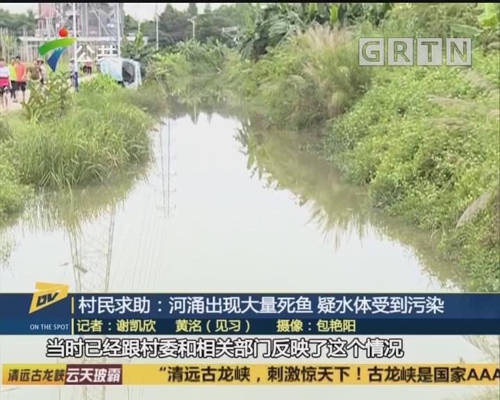 村民求助:河涌出现大量死鱼 疑水体受到污染