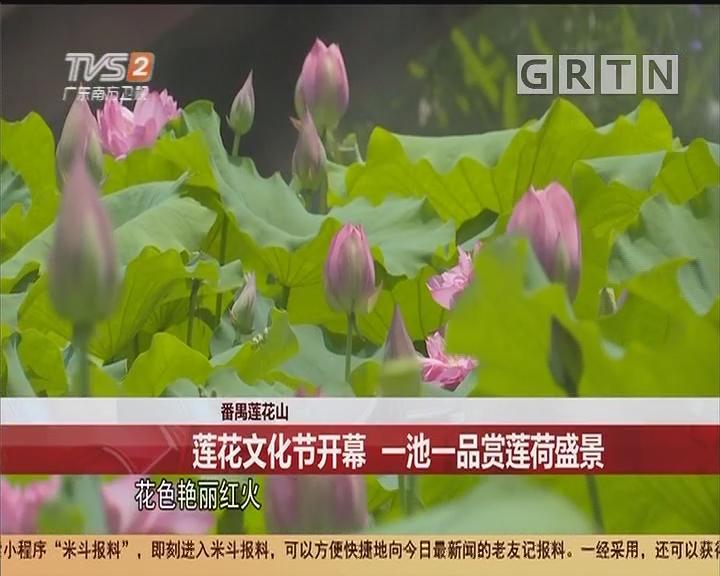 番禺莲花山:莲花文化节开幕 一池一品赏莲荷盛景