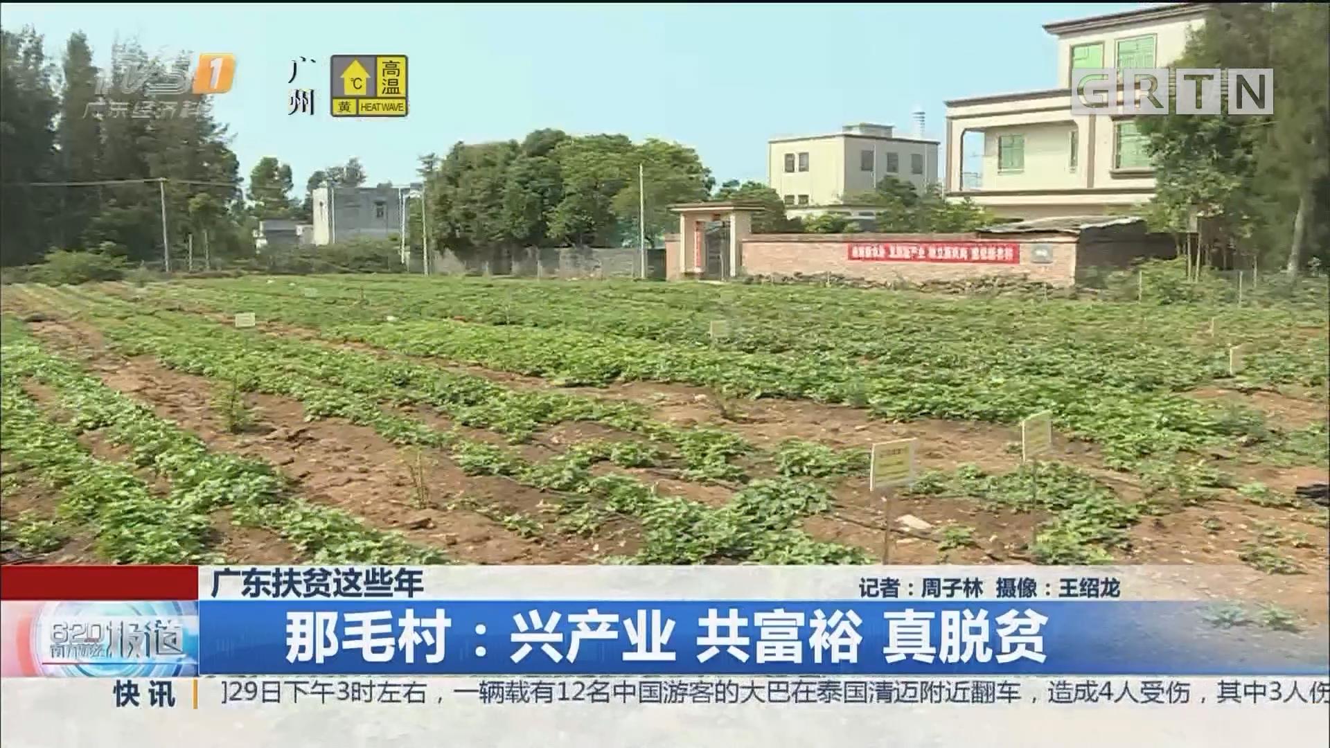 广东扶贫这些年 那毛村:兴产业 共富裕 真脱贫