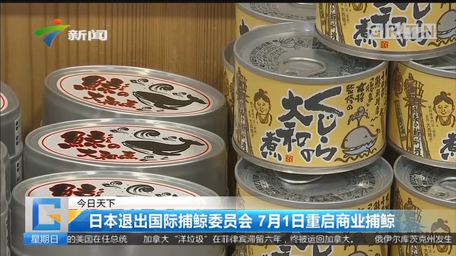 日本退出国际捕鲸委员会 7月1日重启商业捕鲸
