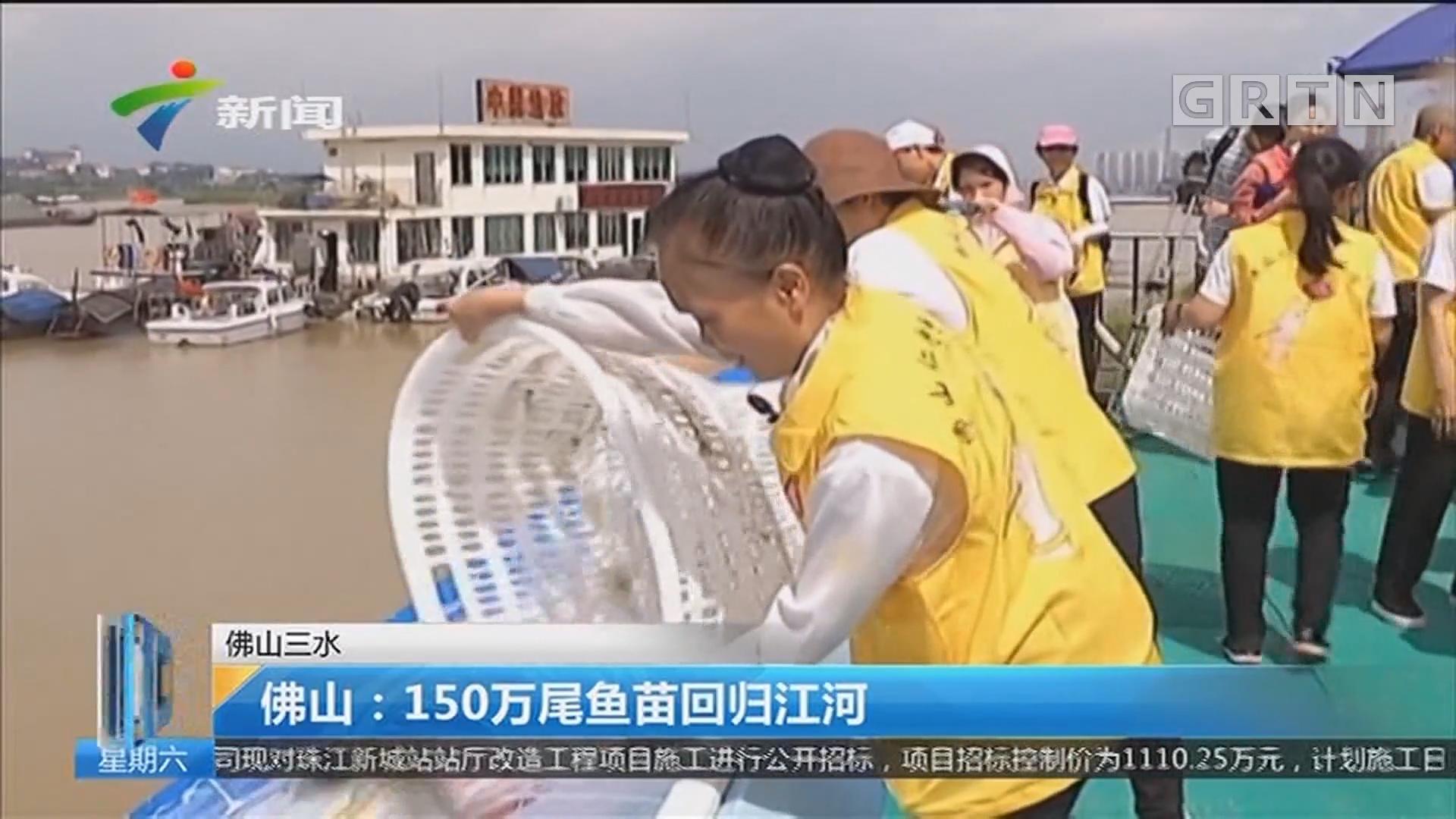 佛山三水 佛山:150万尾鱼苗回归江河