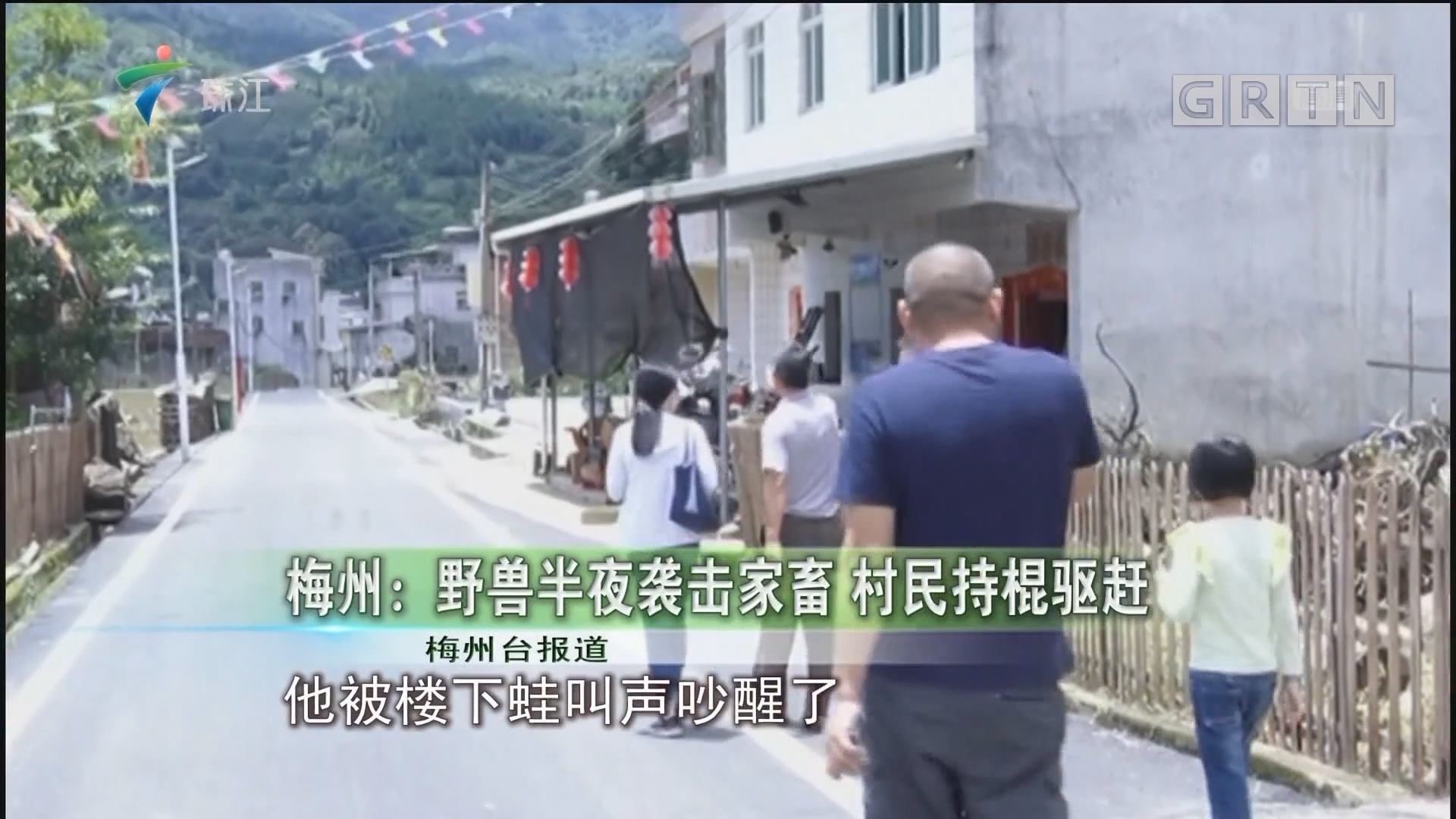 梅州:野兽半夜袭击家畜 村民持棍驱赶