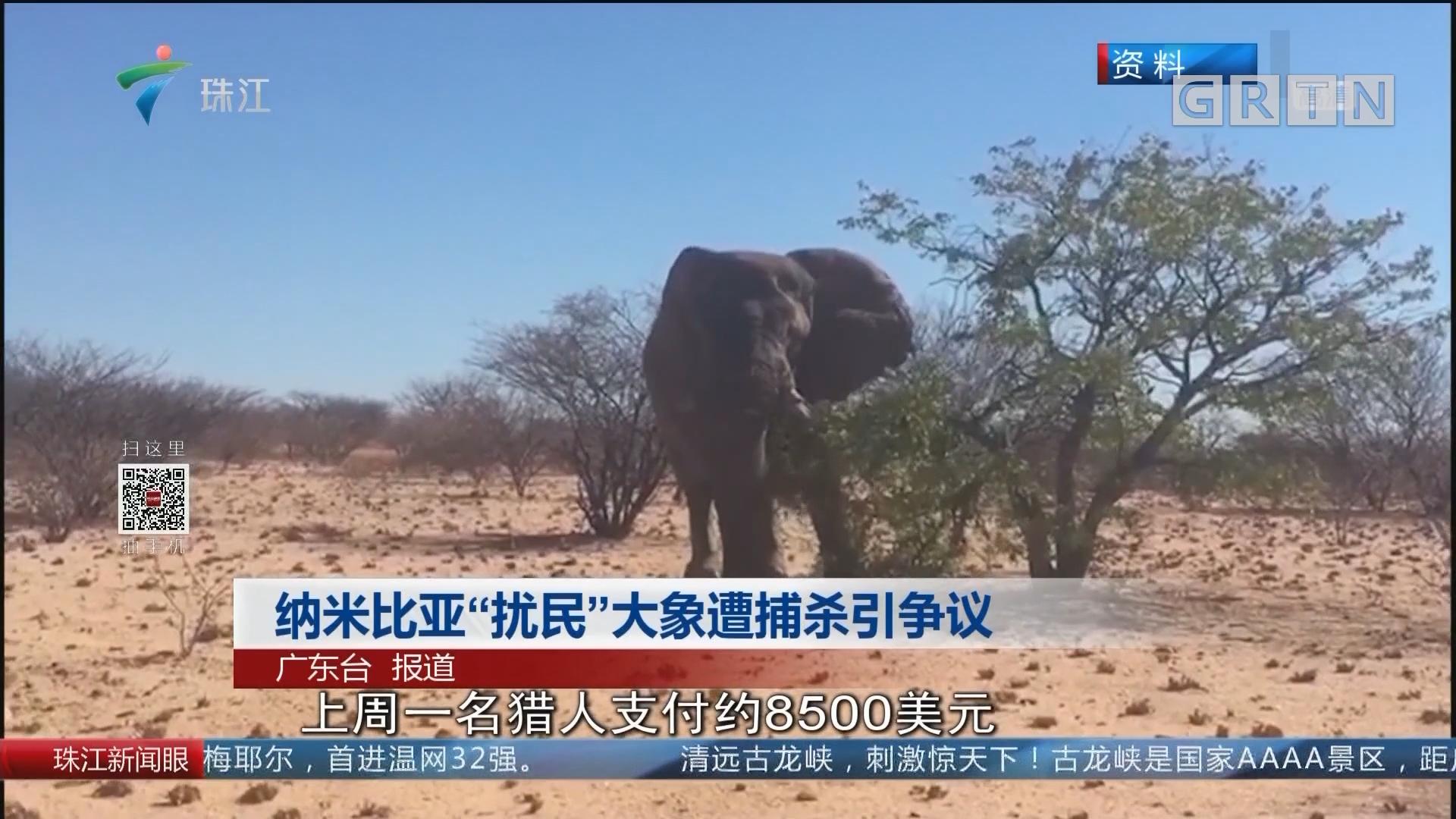 """納米比亞""""擾民""""大象遭捕殺引爭議"""