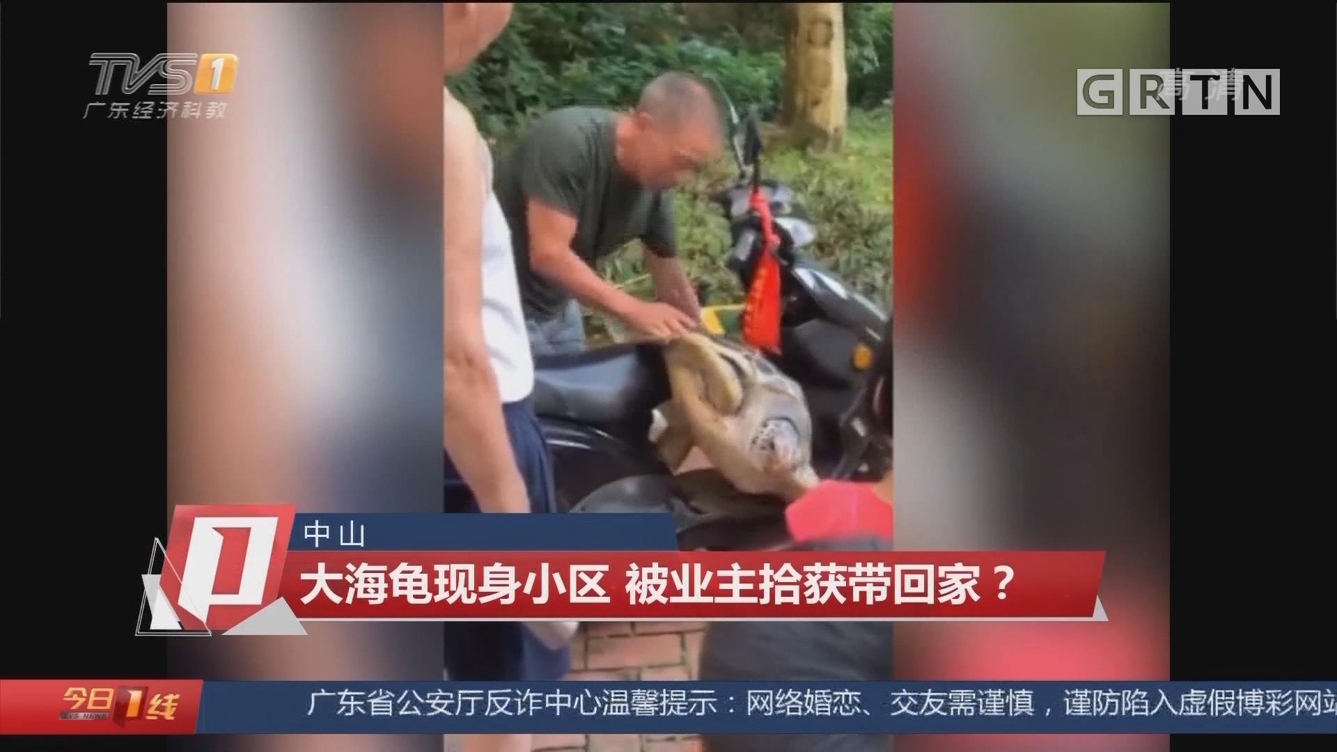 中山:大海龟现身小区 被业主拾获带回家?