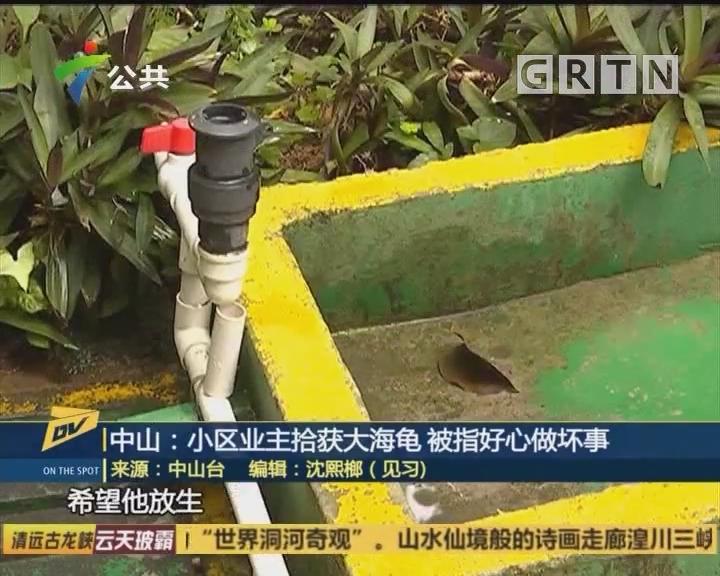 中山:小区业主拾获大海龟 被指好心做坏事