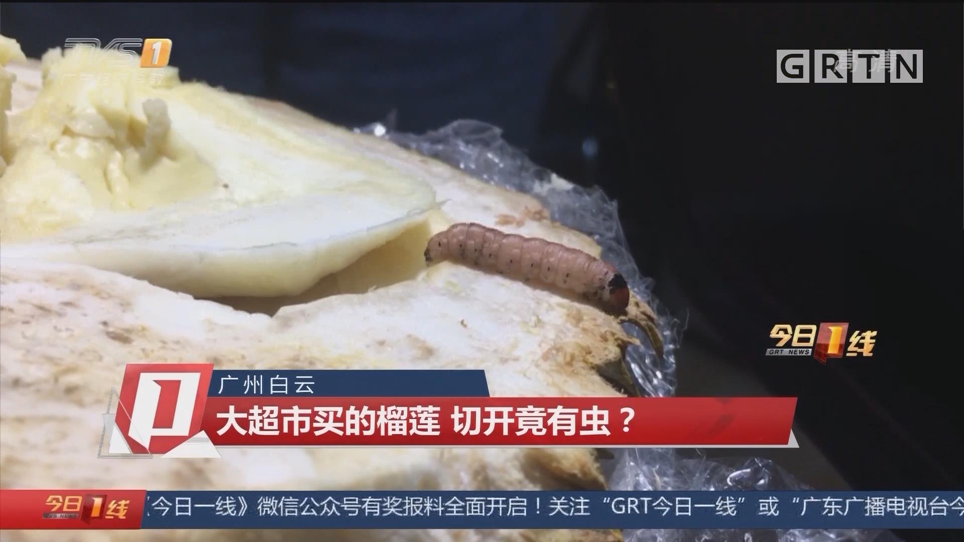 广州白云:大超市买的榴莲 切开竟有虫?