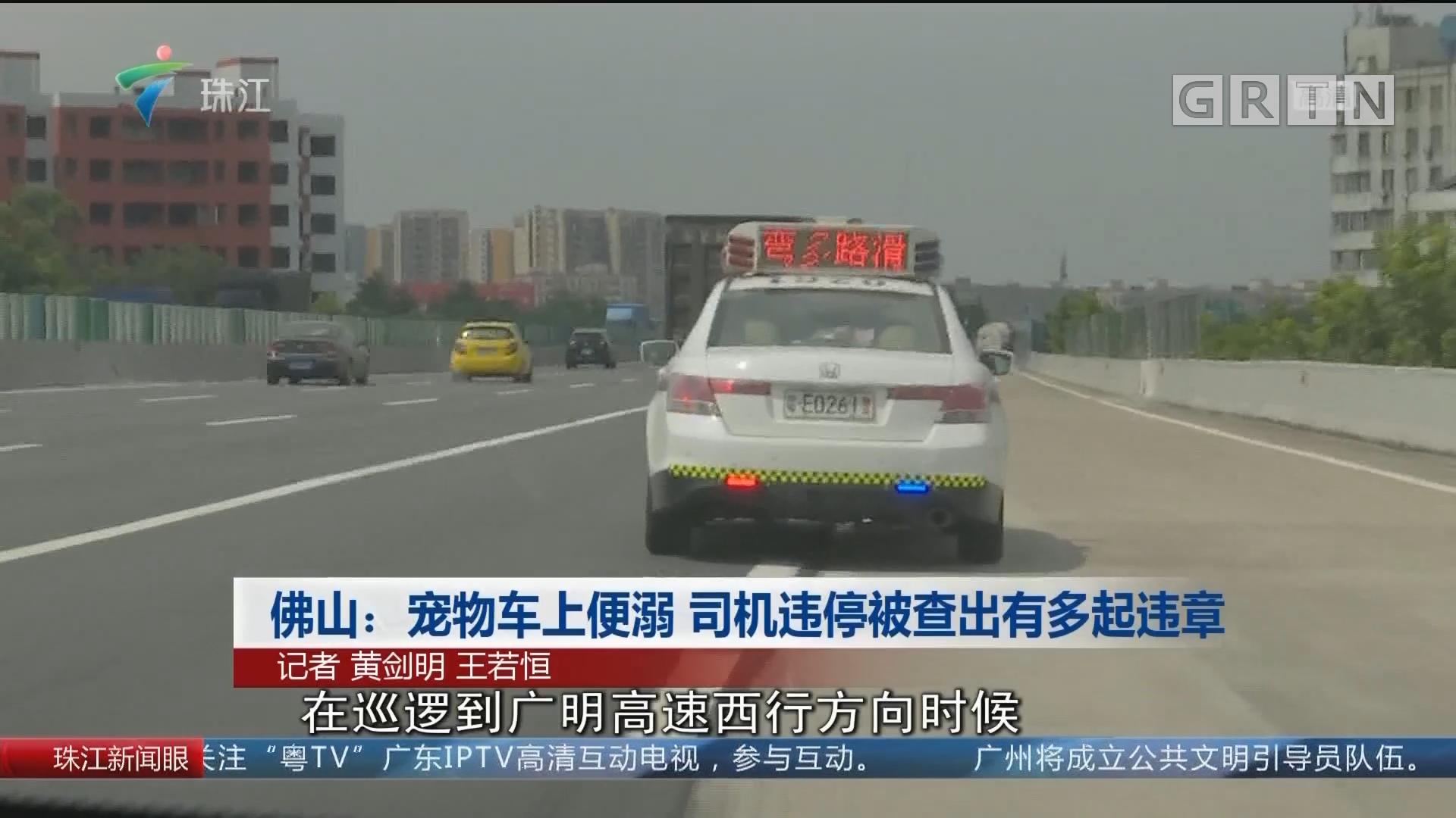 佛山:宠物车上便溺 司机违停被查出有多起违章