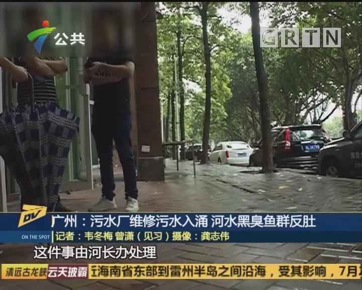 广州:污水厂维修污水入涌 河水黑臭鱼群反肚