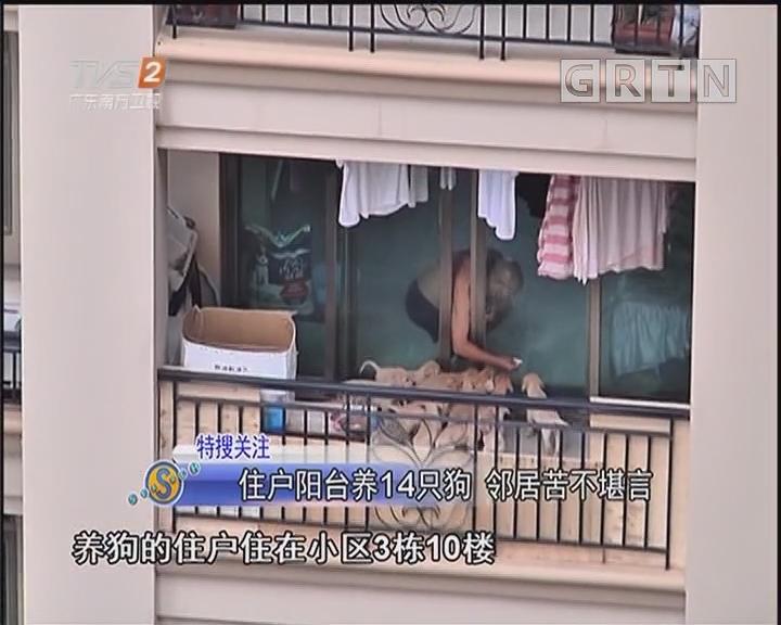 住户阳台养14只狗 邻居苦不堪言