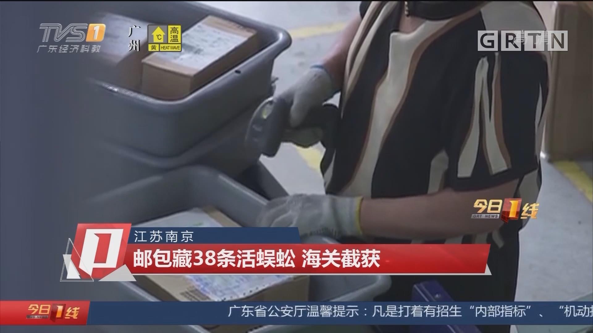 江苏南京:邮包藏38条活蜈蚣 海关截获