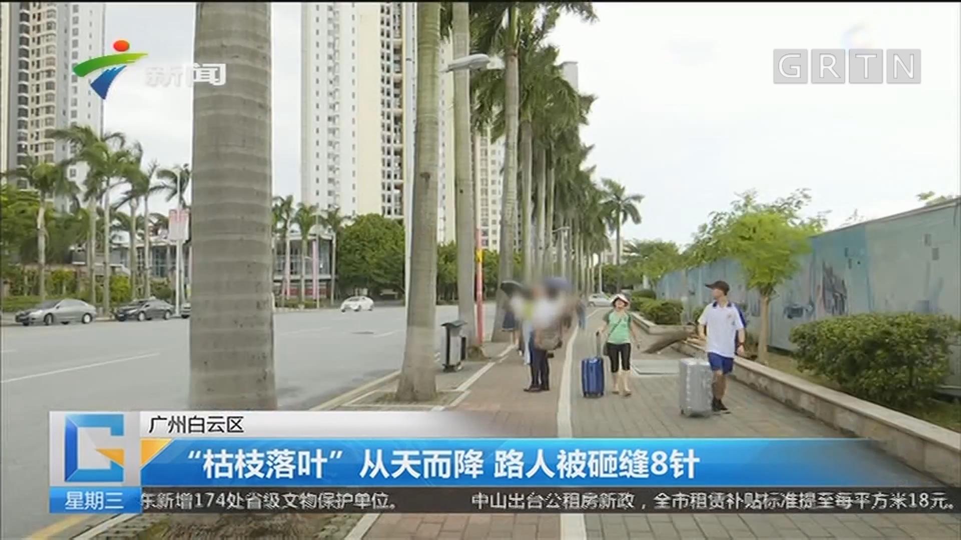 """广州白云区:""""枯枝落叶""""从天而降 路人被砸缝8针"""