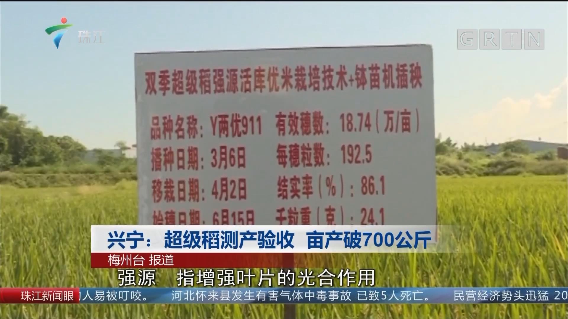 兴宁:超级稻测产验收 亩产破700公斤