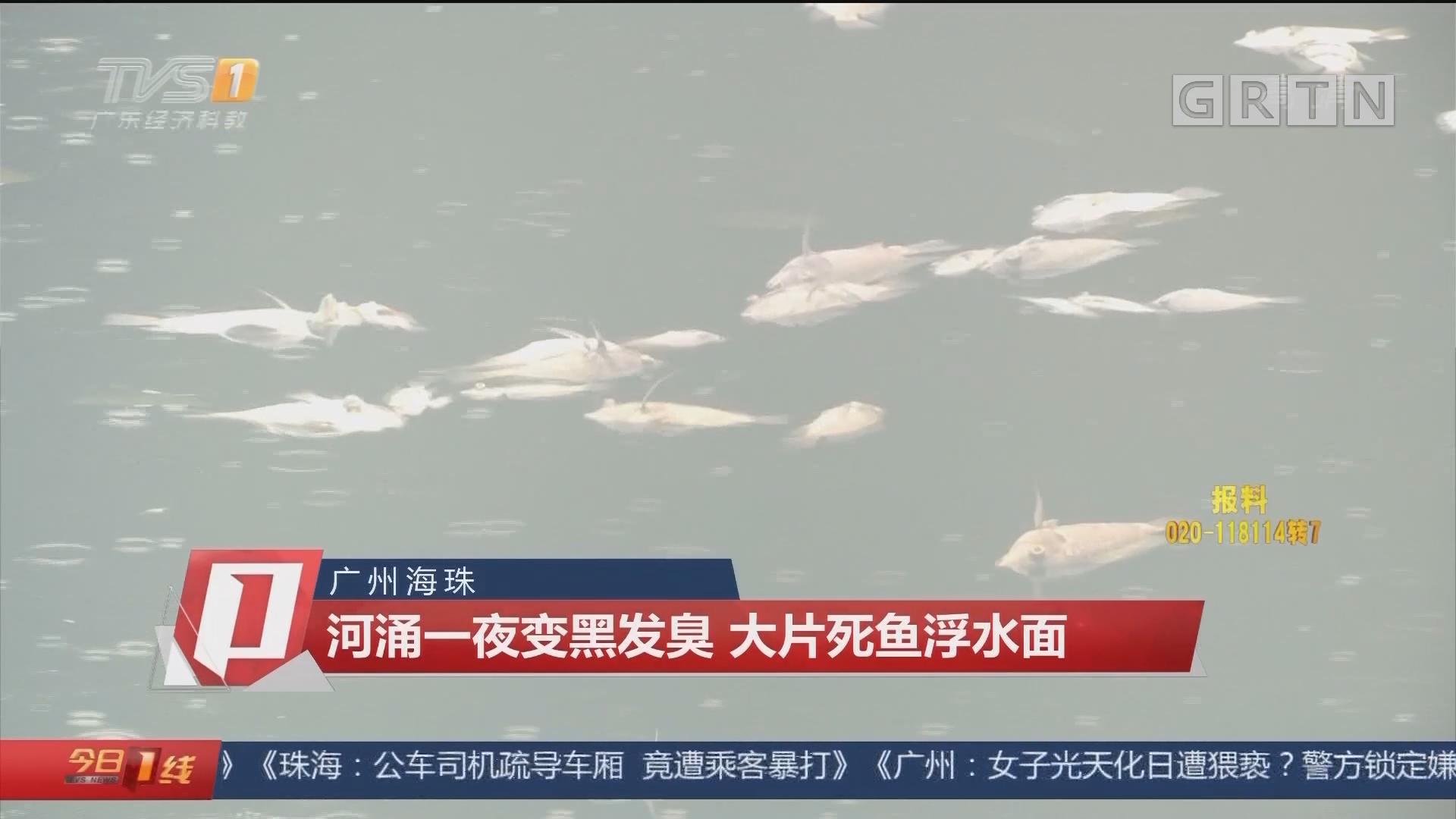 广州海珠:河涌一夜变黑发臭 大片死鱼浮水面