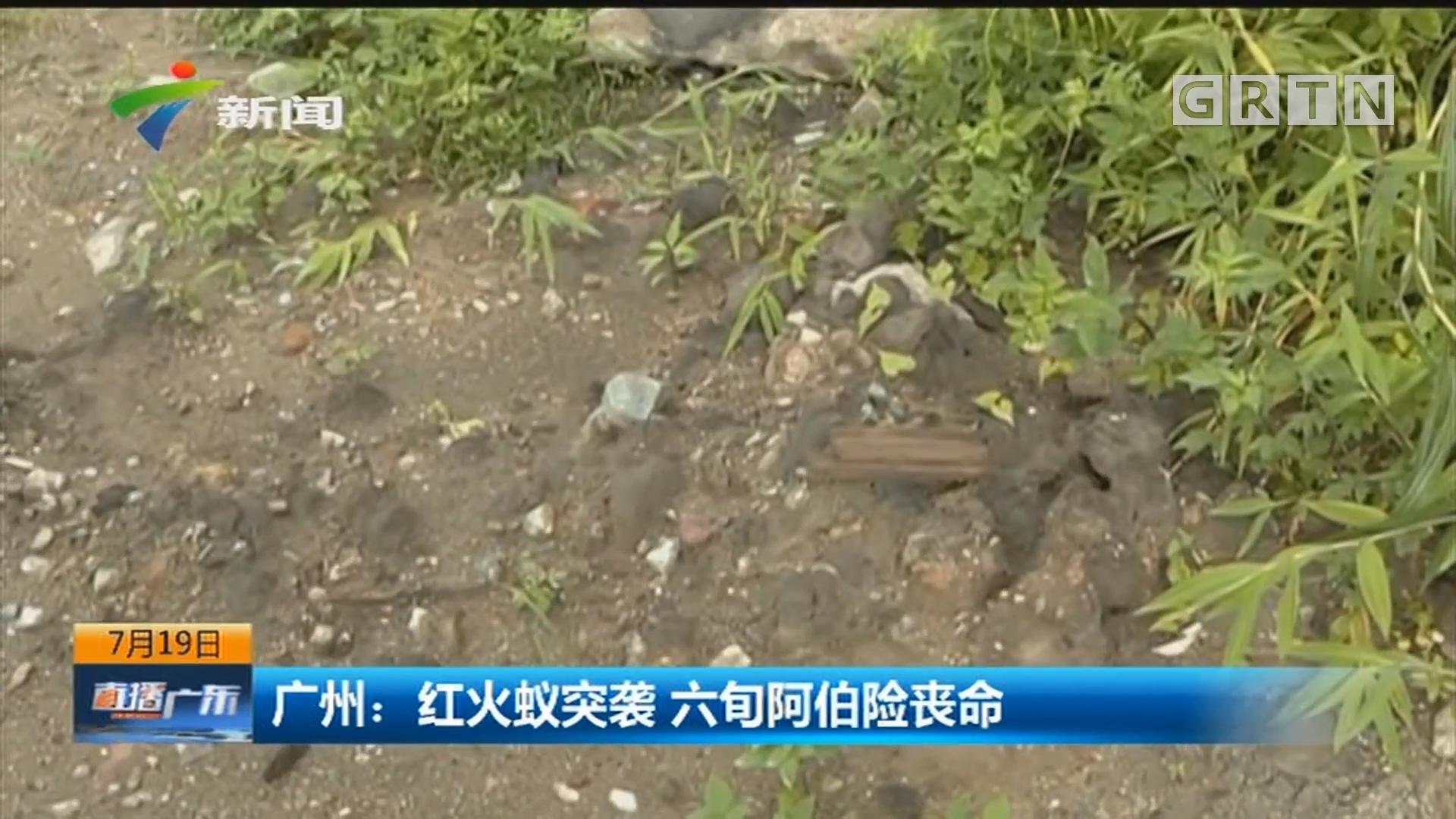 广州:红火蚁突袭 六旬阿伯险丧命