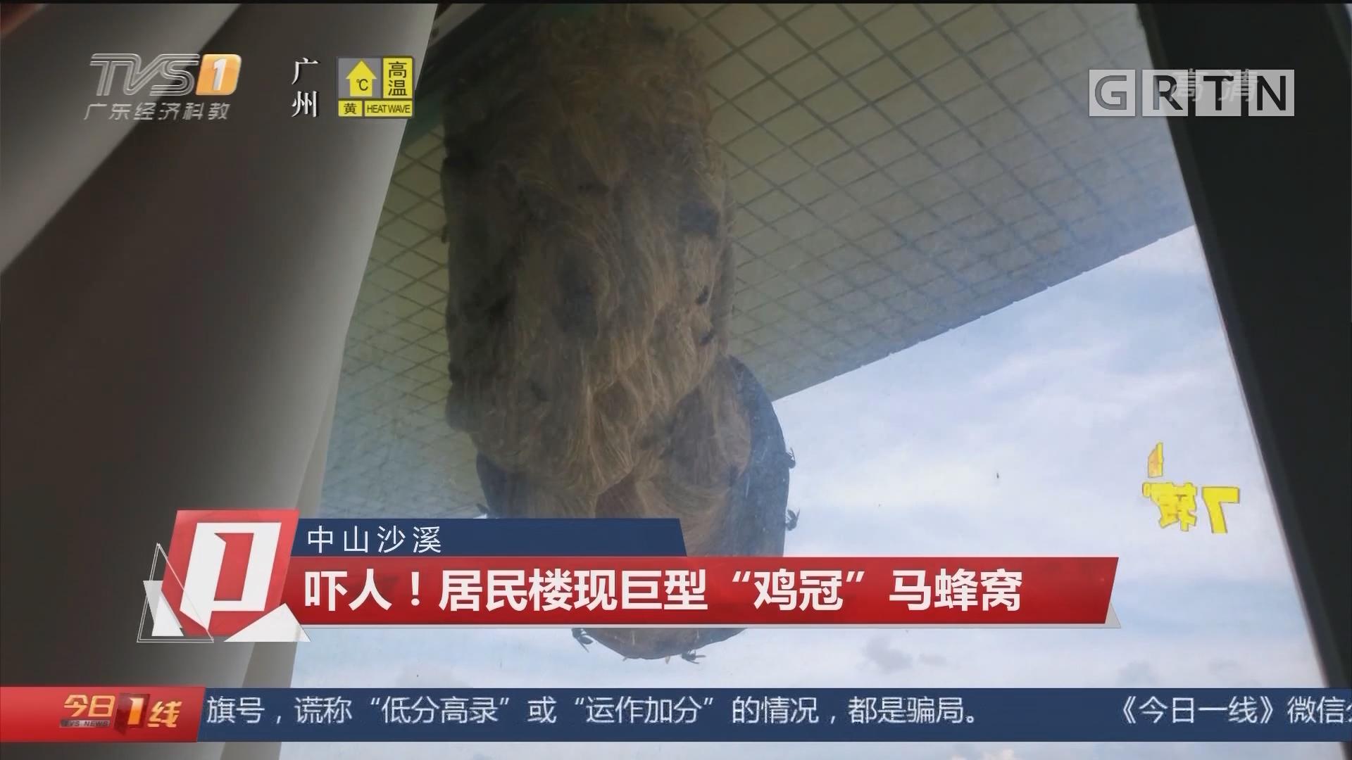 """中山沙溪:吓人!居民楼现巨型""""鸡冠""""马蜂窝"""