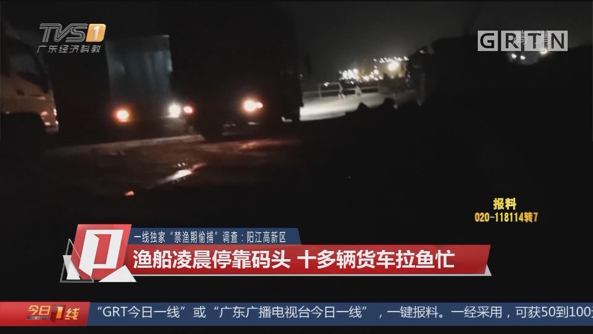 """一线独家""""禁渔期偷捕""""调查:阳江高新区 渔船凌晨停靠码头 十多辆货车拉鱼忙"""