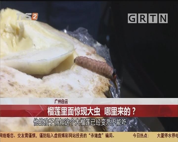 广州白云:榴莲里面惊现大虫 哪里来的?