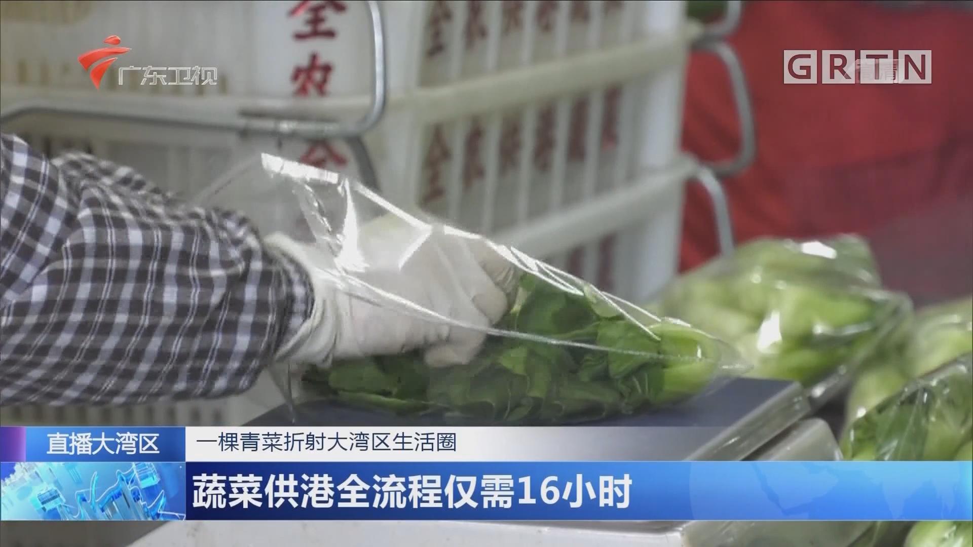 一颗青菜折射大湾区生活圈:蔬菜供港全流程仅需16小时