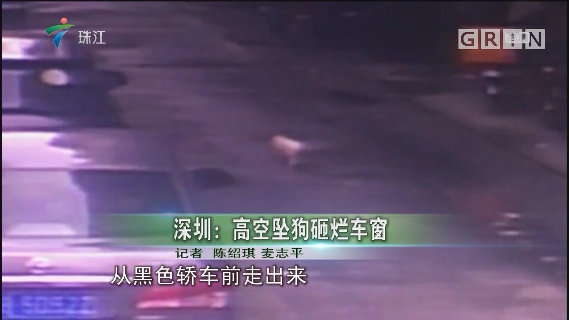 深圳:高空坠狗砸烂车窗