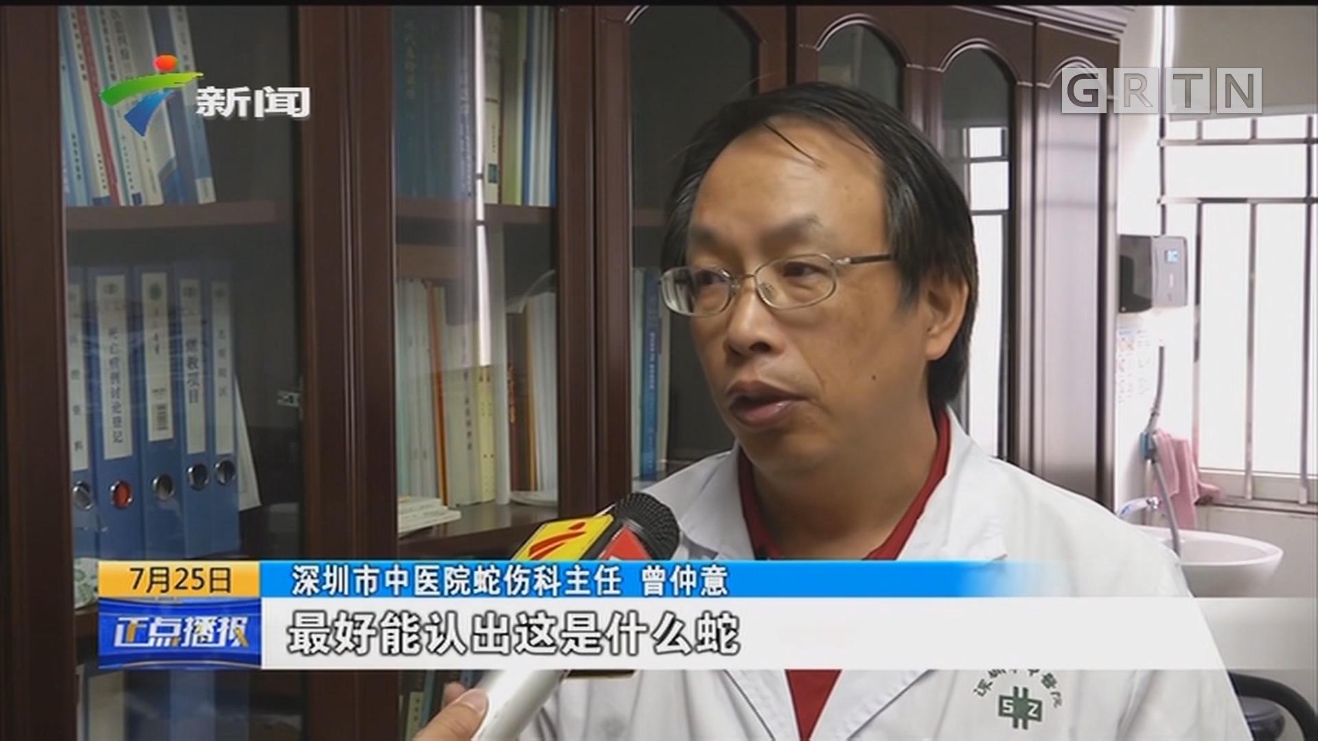 深圳:进入蛇伤高发期 7月份超过100人被蛇咬伤