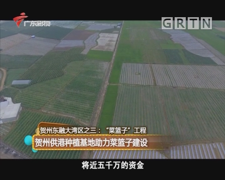 贺州东融大湾区之三:贺州供港种植基地助力菜篮子建设