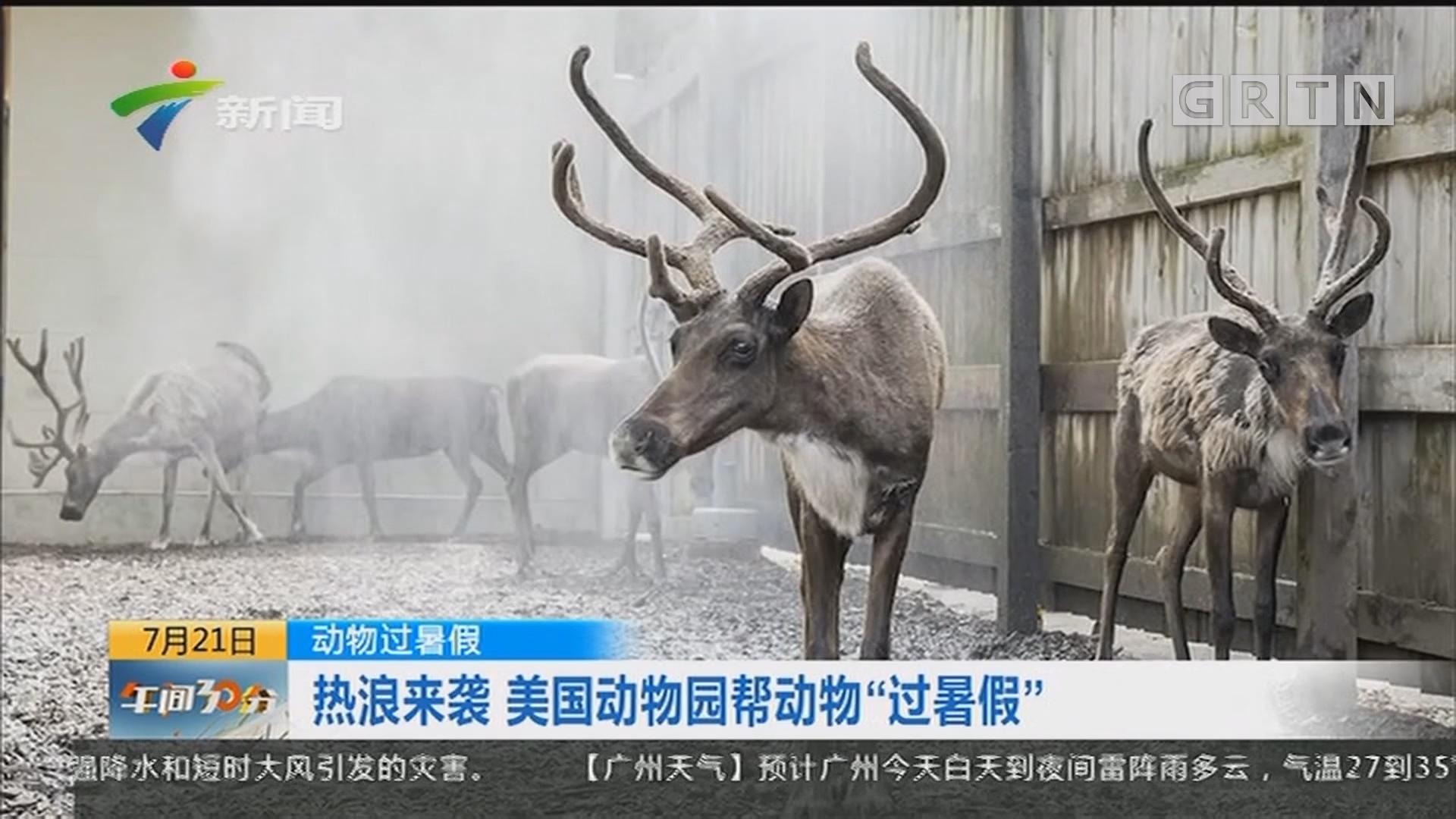 """动物过暑假:热浪来袭 美国动物园帮动物""""过暑假"""""""