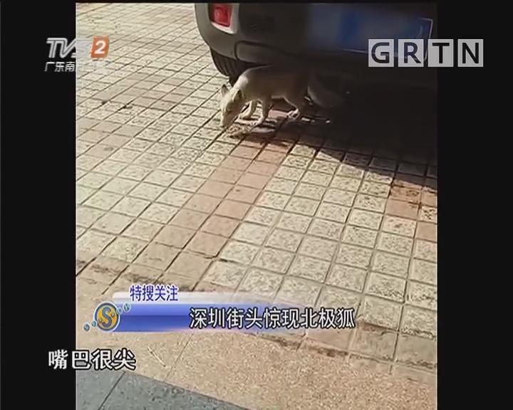 深圳街头惊?#30452;?#26497;狐