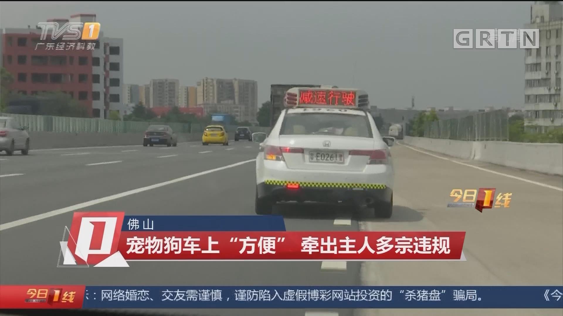 """佛山:宠物狗车上""""方便"""" 牵出主人多宗违规"""