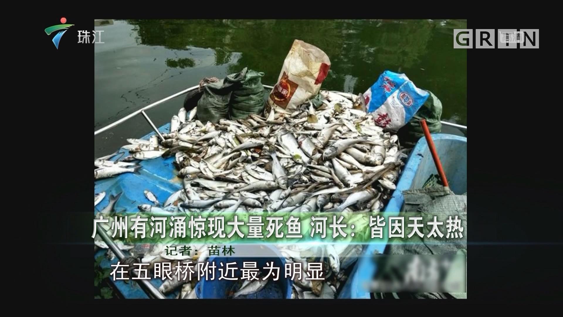 广州有河涌惊现大量死鱼 河长:皆因天太热