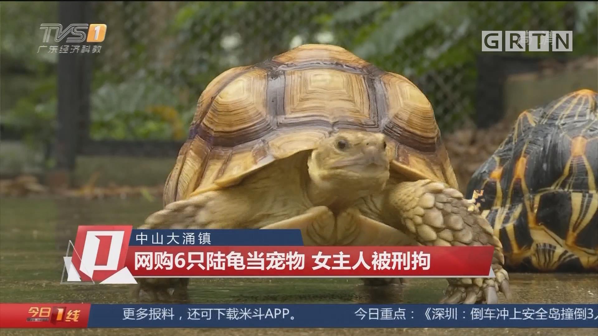 中山大涌镇:网购6只陆龟当宠物 女主人被刑拘