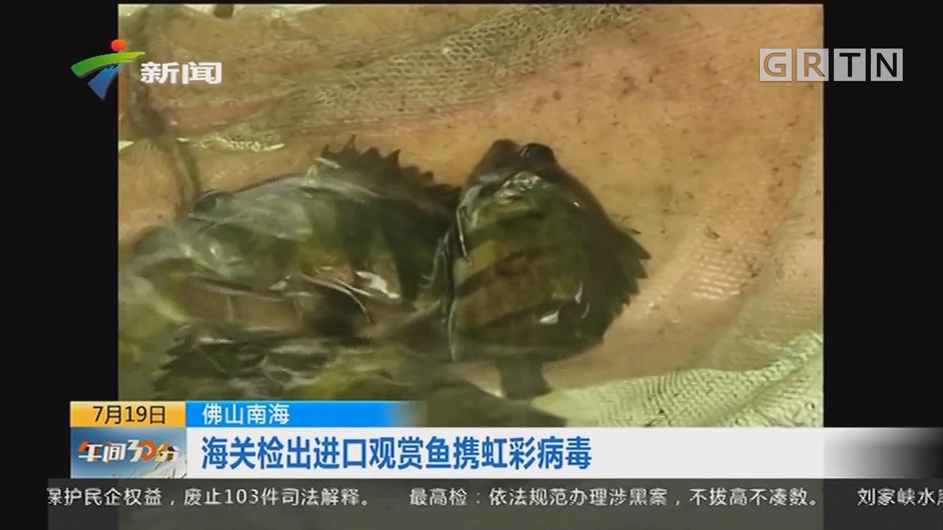佛山南海:海关检出进口观赏鱼携虹彩病毒