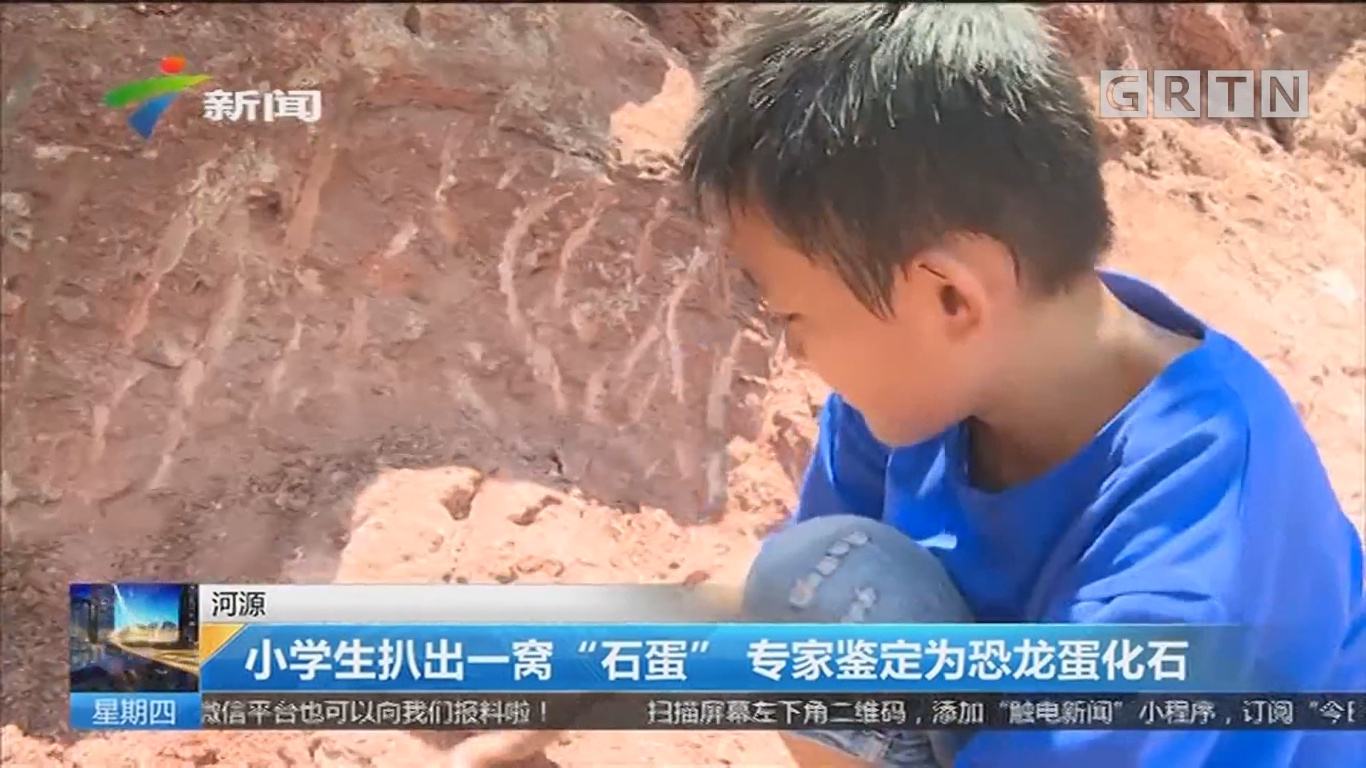 """河源:小学生扒出一窝""""石蛋"""" 专家鉴定为恐龙蛋化石"""