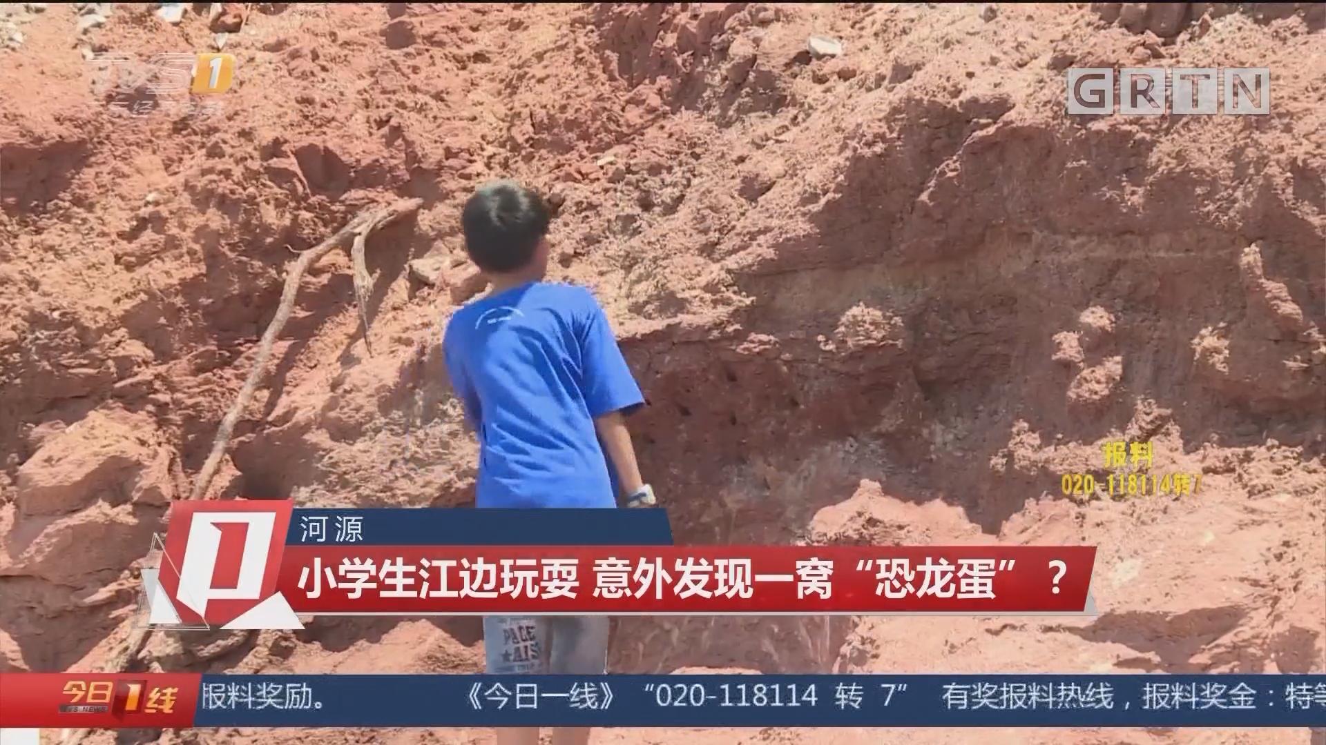 """河源:小学生江边玩耍 意外发现一窝""""恐龙蛋""""?"""