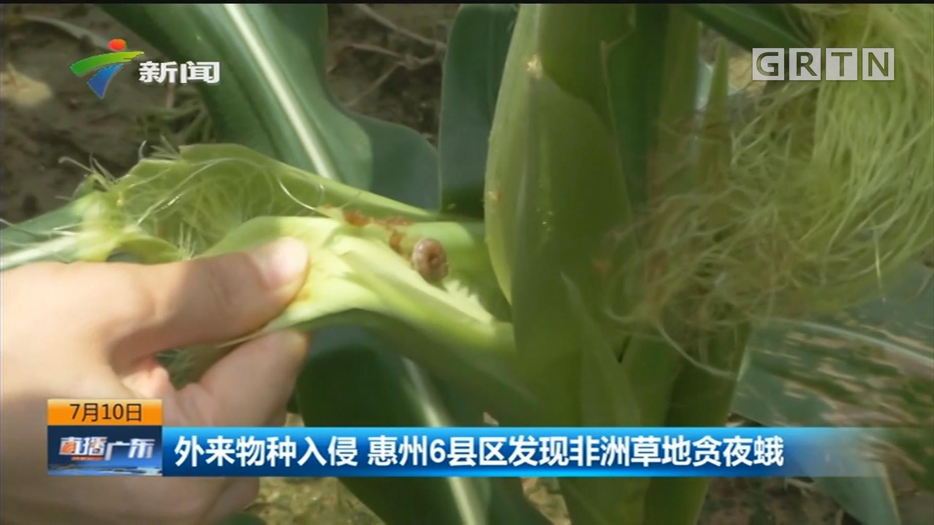 外来物种入侵 惠州6县区发现非洲草地贪夜蛾
