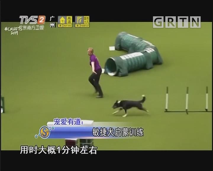 宠爱有道:敏捷犬启蒙训练