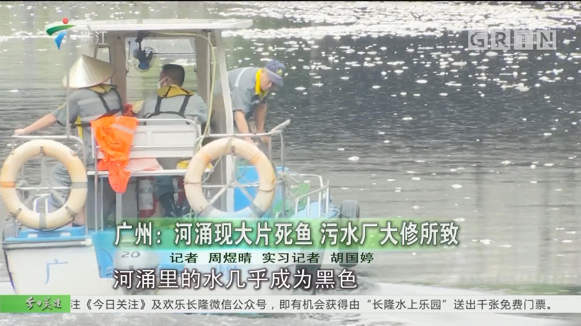 广州:河涌现大片死鱼 污水厂大修所致